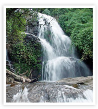 Power House Waterfalls Munnar Kerala munnarhotels.com